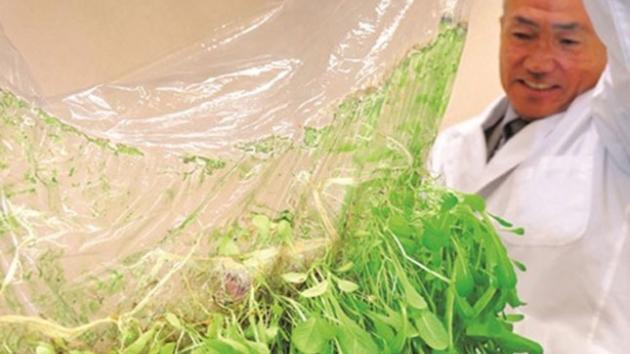 Suger bladlus saften ud af dine planter?