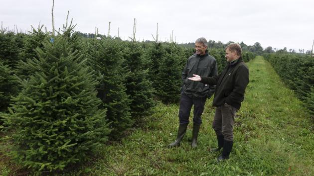 juletræer til salg københavn