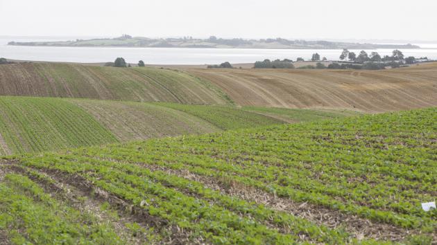 Otte landmænd tester nyt alternativ til efterafgrøder