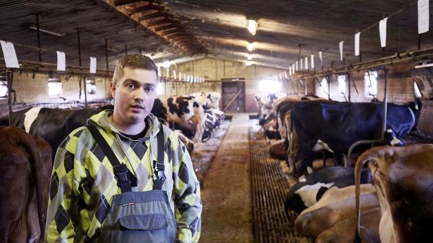 danmarks største kvægbesætning