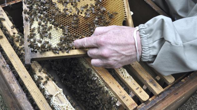 danmark biavlerforening
