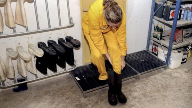 6:Stil dig på en rist og tag et sæt tørre og rene støvler fra stativet. Undgå at træde med sokker i selve staldområdet, fordi du så bringer snavs med tilbage til forrummet, når du skal ud igen. Nu er du klar til at gå ind i stalden.