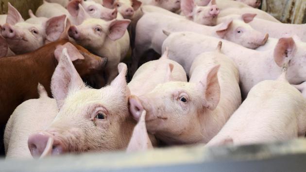 grise navne