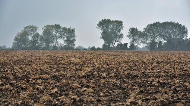 Her er det en mark på Nordfyn i efteråret.