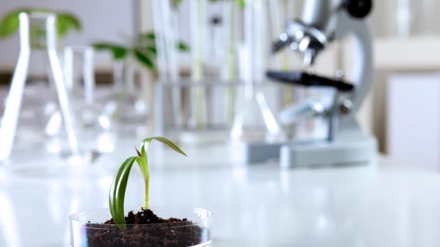 crispr genteknologi farm to fork gmo genmodificering genteknologi