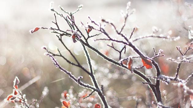 April starter med kølige og blæsende dage