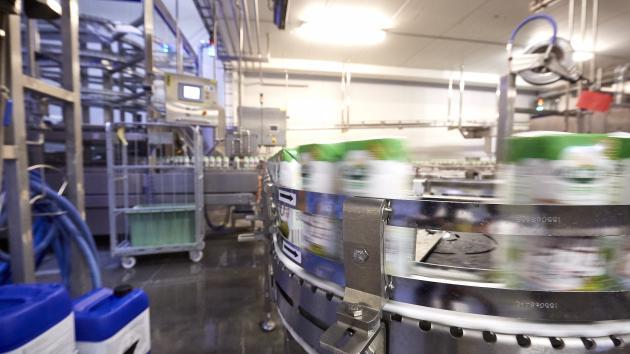 Produktion af mælk på Esbjerg mejeri