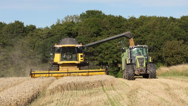 Landmand høster hybridhvede: Har været en dyr omgang