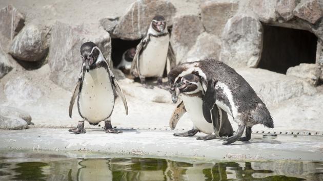 rabat kbh zoo