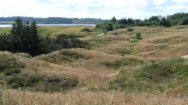 Lovforslag om Danmarks nye naturnationalparker er klar til...