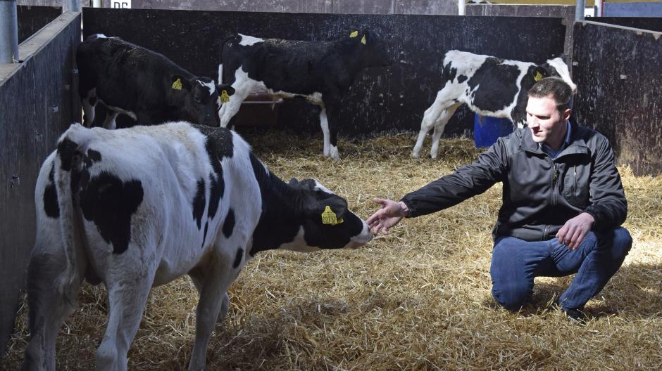 Fra Føtex Reklamer Til Kalve Mælk Landbrugsavisen