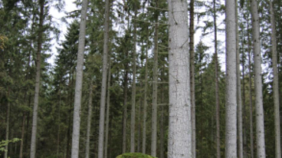 skov i sverige