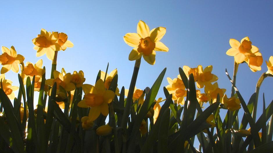 3617c4a1a2d5 Både blomsterne og vi andre får fornøjelser af masser af sol i weekenden