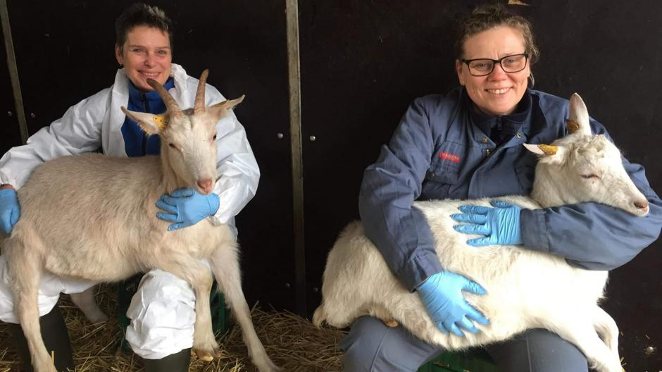 Inge med en af gederne fra Freerslev Kotel og Gårdbutik