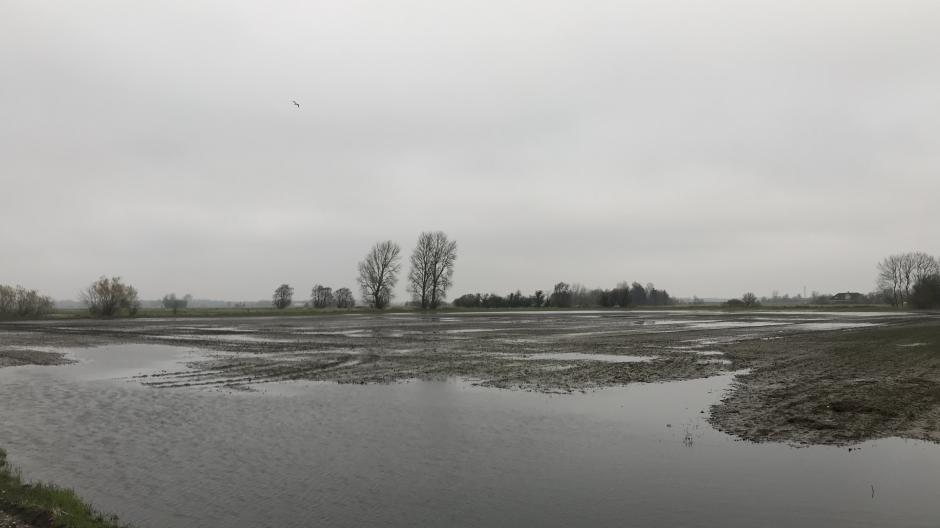regn, våde marker
