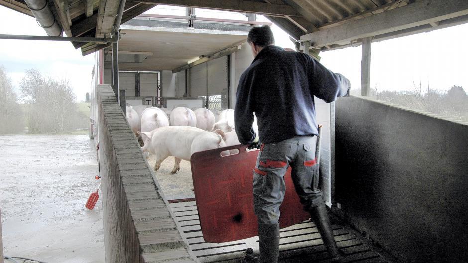 kontrol af dyretransporter