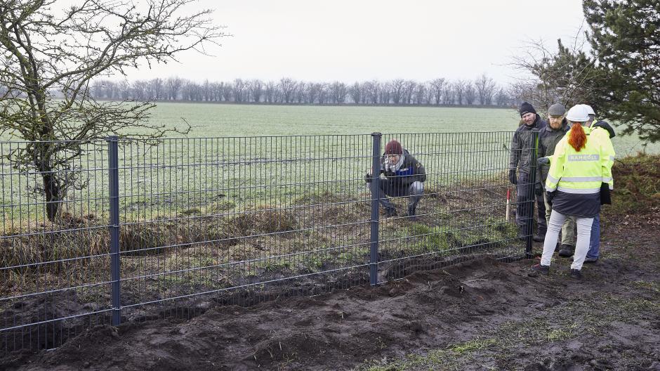 vildsvin svinepest vildsvinehegn hegn