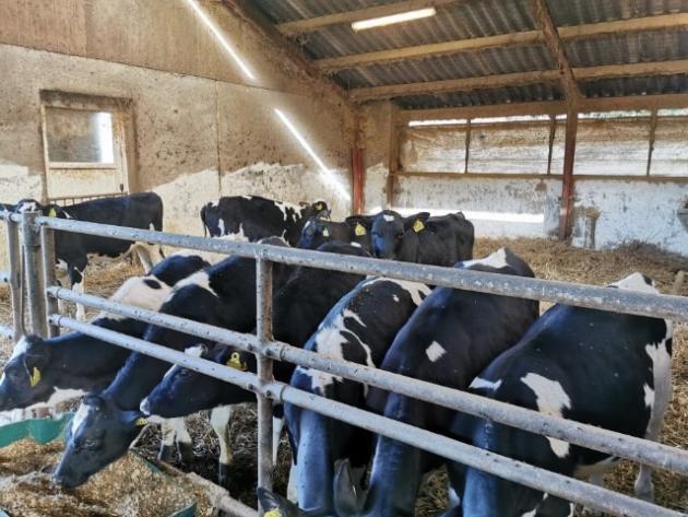 Sponsoreret MSD Animal Health: Efter billede kalve