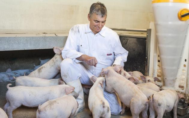 Det giver mindre arbejde og et lavere medicinforbrug, når tarmsundheden hos smågrisene er i orden, forklarer svineproducent Torben Bang.