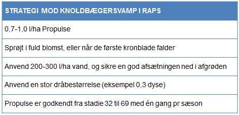 Strategi mod knoldbægersvamp i raps