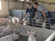 landbrug praktik arbejdskraft lempelser