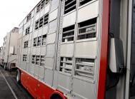 svinepest svinetransport eu tjekkiet