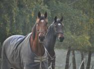 Lov om Hold af Heste