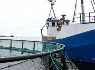 Hjarnø havbrug