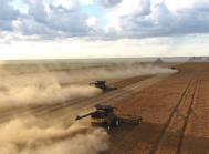 Høst af ærter i Canada. Foto: MY AGRO.