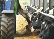 foder kvæg