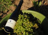 Ørnbjerg vin