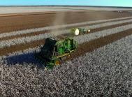 Høst af bomuld i Australien.