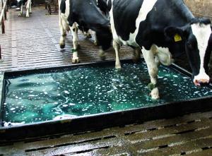 Sponsoreret MSD Animal Health: Klovsundhed har afgørende betydning for levetiden