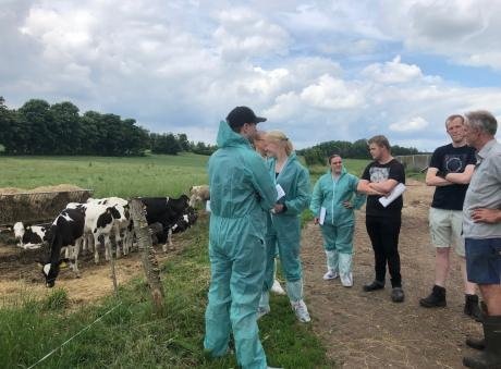 Sponsoreret MSD Animal Health