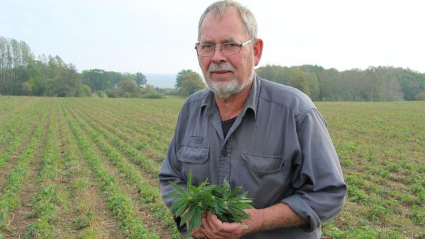 Finn Harild satser målrettet på at dyrke specialafgrøder. Udover lupin, som han står med på billedet, gælder det blomsterfrø, græsfrø og en række niche-kornafgrøder som f.eks. manitobahvede og durum.,