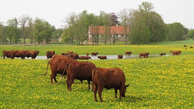 økologisk landsforening husdyrracer uddø